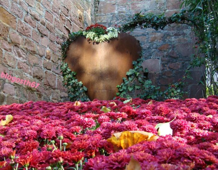 chrysanthema 2014 blogosth