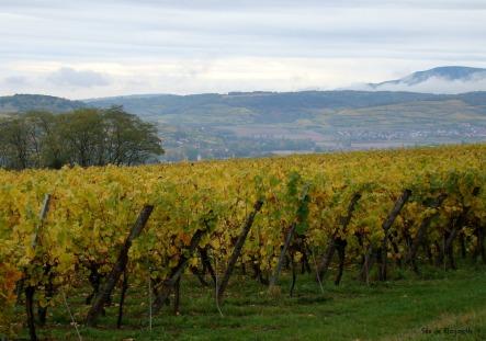 Vigne panorama Vosges