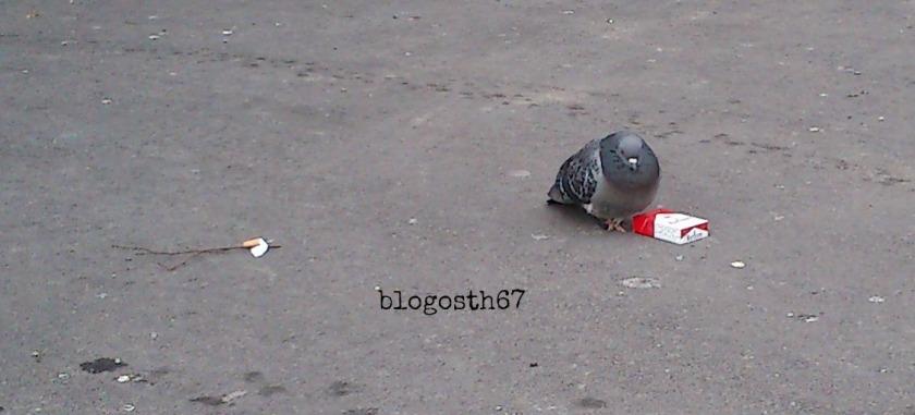 Pigeon_fumeur
