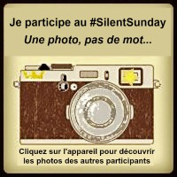 Logo_Silent_Sunday