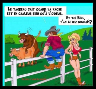 Vache_Taureau_Fecondation